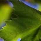 2012_09_24-IMG_1018-01