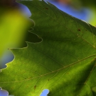 2012_09_24 - IMG_1018 - 01