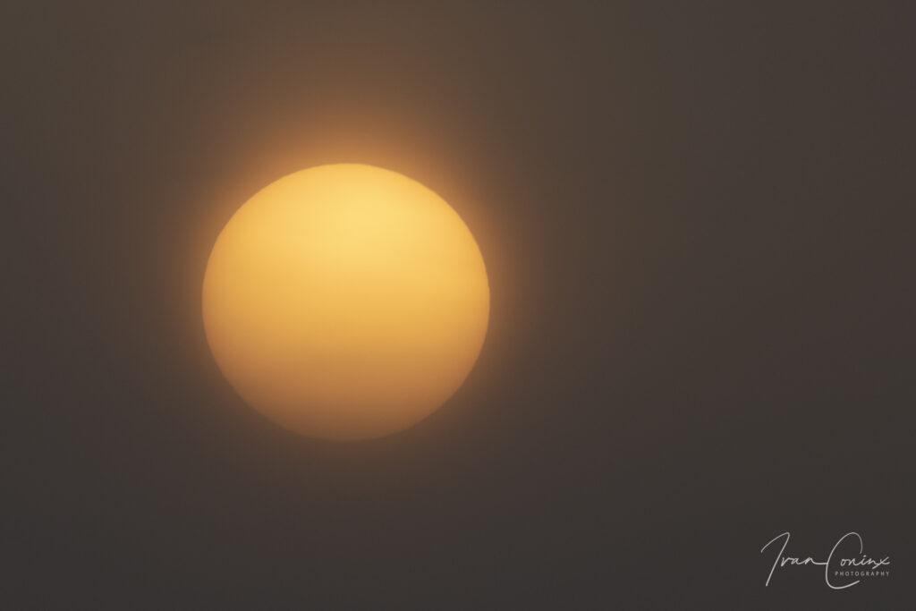 2021_03_03-Sun-01-1024x683.jpg